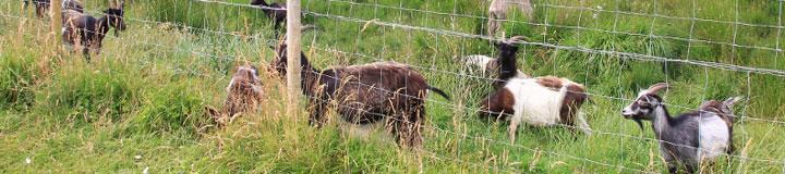 Wild Goat Park