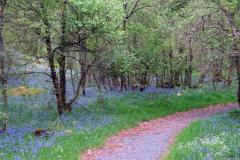 Camer Woods