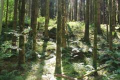 Balloch Wood, Creetown