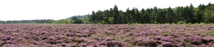 Kirkconnell Flow National Nature Reserve